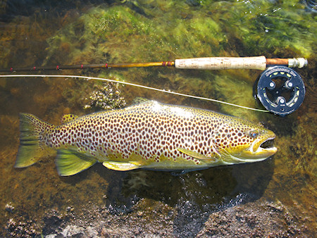 Trout week 12B  13th August -20th August