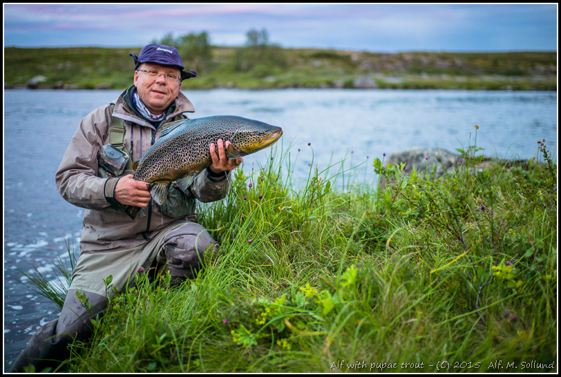 2015_31A_BrownTrout-3