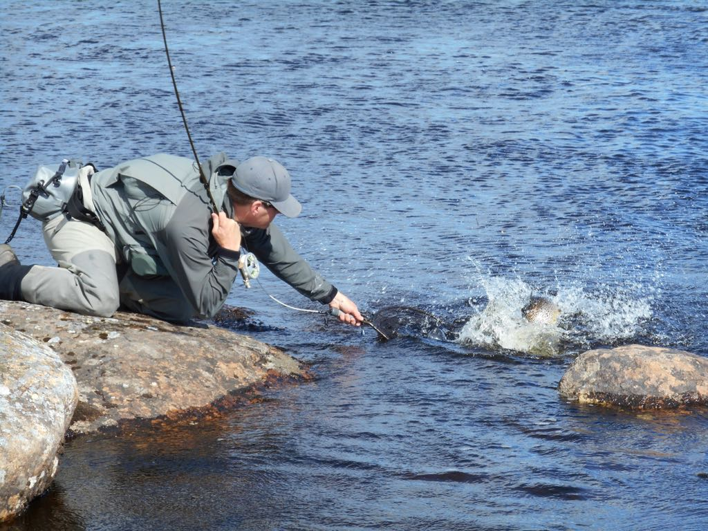 TE fighting a trout