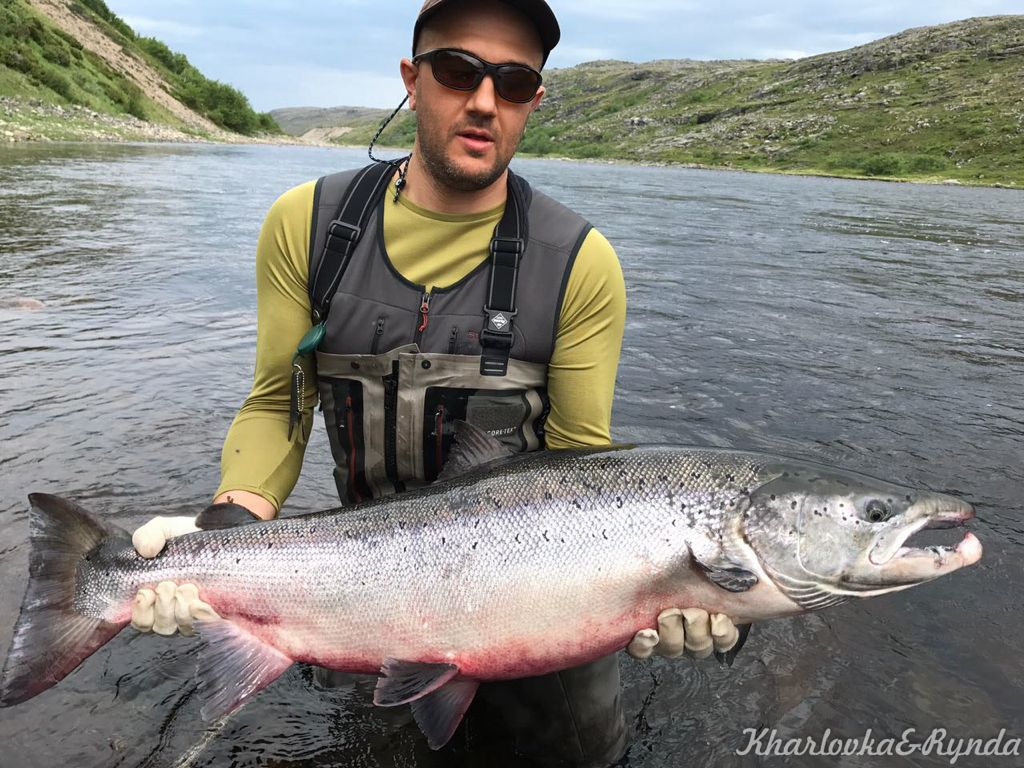 atlantic_salmon_reserve_kharlovka_2017_week_28